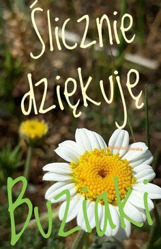 Good Morning, Funny Quotes, Humor, Bom Dia, Funny Phrases, Buen Dia, Humour, Bonjour, Funny Qoutes