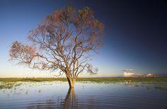 flood plain near Coonamble NSW Australia