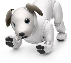 from a revival to funerals of old generations, sony's robotic dog aibo might have gone out of production for over 10 years but it never went out of sight. Design Language, Dog Hacks, Unique Animals, Pet Gifts, Amazing Architecture, New Technology, Pet Toys, Piggy Bank