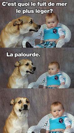Palourde