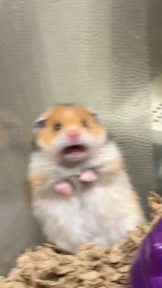 Why That Screaming Hamster Isn't Funny . Baby Animals Pictures, Cute Animal Photos, Funny Animal Pictures, Funny Animal Jokes, Cute Funny Animals, Memes Lindos, Funny Hamsters, Funny Cats, Mood Pics