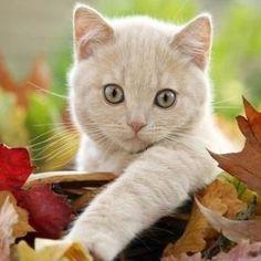 Pretty Autumn Kitten.