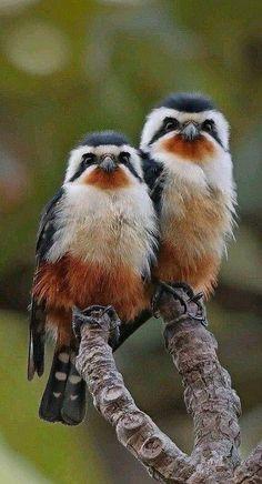 Una bonita pareja.
