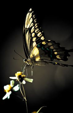"""""""Chasing Butterflies No. 2""""  by Keitha, via flickr"""