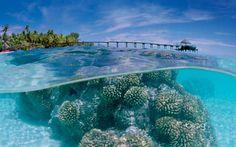 Tahití    Para aquellos que buscan relajarse, disfrutar de la naturaleza y de una cultura extraordinaria, no hay duda de que Tahití, la isla más grande de la Polinesia Francesa, es el lugar ideal. Compuesta por 118 islas – entre ellas, Bora Bora-, está mítica región se caracteriza por su compromiso con el medio ambiente. Construcciones como bungalows fueron escogidos para frenar el impacto ecológico.
