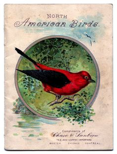 scarlet tanager bird illustration