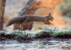 springen naar de nieuwe week ;-) - Zoogdieren (bever, vos, muis) - eekhoorn