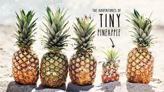 pineapple tumblr - Google Search