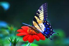 #butterflies #butterfly #nature #beautiful #amazing #bellissime #farfalla #farfalle #flowers #flower #fiori #natura #fiore #incanto #meravigliedellanatura #meraviglie #light #luce #black #nero #purple #viola #pois #dot #cream #crema #white #bianco