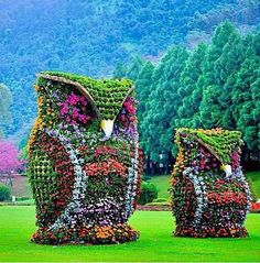 Cute owl bushes!!!