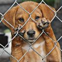 Ban Wire Cages That Hurt Puppy Paws!    http://theanimalrescuesite.greatergood.com/clickToGive/takeaction.faces?siteId=3=DOW-HandsOffYellowstoneWolves=1t57hz4ir6t73hagsmtgi=zohs2ihajxil#