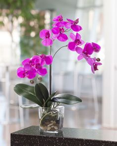 Phalaenopsis Orchids Care – How to Plant, Grow & Grow [Step-By-Step] TOP 10 Tipps zur Pflege von Phalaenopsis Orchideen Phalaenopsis Orchid Care, Orchid Plant Care, Silk Orchids, Orchid Plants, Exotic Plants, Moth Orchid, Orchids Garden, Flowers Garden, Exotic Flowers