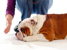 TOP 10 DOG TRAINING TIPS! If you are in the process of training your dog, you can check out the top ten dog training tips here! Puppy Training Tips, Training Your Dog, Crate Training, Positive Dog Training, Aggressive Dog, Dog Behavior, Dog Care, I Love Dogs, Best Dogs