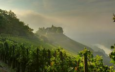 Mist over the Mosel @Moselholidays