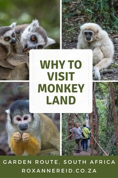 Why you'll love Monkeyland near Plettenberg Bay - Roxanne Reid