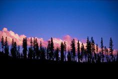 Trees: Mt Hood