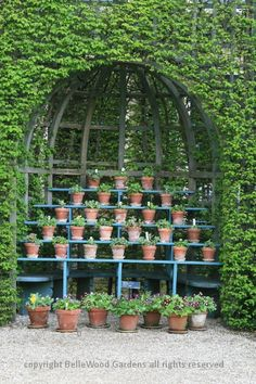 auricula theatre set in a lattice niche . this charming display unifies the potted primulas with the rest of the garden . via BelleWood Gardens Diary
