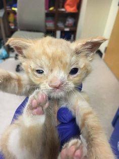 rescue cat smush