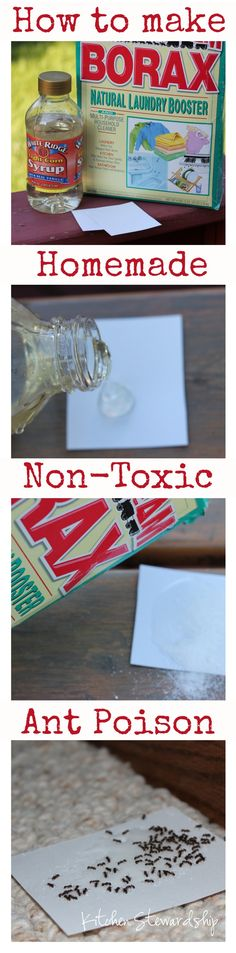 Get those annoying little ants out of your kitchen for good! DIY #homemade ant poison that is non-toxic and safe for kids. Takes only 45 seconds to make - you need this recipe! :: via Kitchen Stewardship  #green #natural #insects