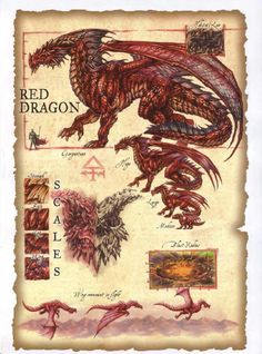 Dragon rouge                                                                                                                                                                                 Plus