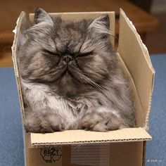 """THERE IS NO WAY ON GOD'S GREEN EARTH MY OWNER PURCHASED THIS PIECE OF JUNK AT """"THE ELITE MATTRESS"""" SHOPPE.....ccp"""