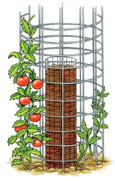 Use a vertical, double-ringed cage for a huge tomato harvest that takes up no space at all