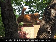 Attack Of The Funny Cats – 62 Pics I laughed out loud. Freaked my cat out. If you like cats....look at this.