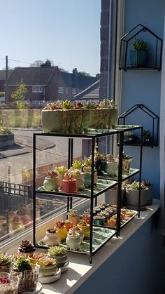 Room With Plants, House Plants Decor, Plant Decor, Indoor Garden, Indoor Plants, Home And Garden, Plant Aesthetic, Aesthetic Room Decor, Decoration Plante