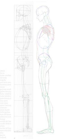 2016-04-24 lat anatomy 003