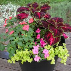 Choosing plants for their foliage color adds drama to the plant grouping and provides season-long color. Foliage can be silver, red, yellow-green, blue-green, or variegated.