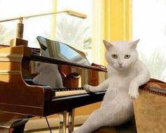 じゃあ逆に「人間ふんじゃった」なんてふざけた曲あったら演奏したいと思う?