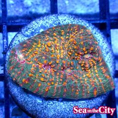 Saltwater Aquarium, Coral, City, Saltwater Tank, Cities