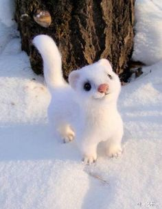 This cute little guy can lay a strong claim to being the happiest stoat in the world! Rare Animals, Felt Animals, Cute Baby Animals, Animals And Pets, Funny Animals, Cutest Animals, Animal Pictures, Cute Pictures, Cute Little Things