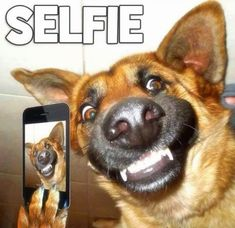 Super Ideas For Memes Faces Funny Dogs New Funny Jokes, Memes Funny Faces, Funny Dog Memes, Funny Laugh, Funny Kids, Funny Quotes, Selfies, Funny Couple Pictures, Gato Gif
