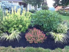 The barberry and two lower spidery looking plants are very similar to what I used in the retaining wall garden. Garden Oasis, Patio Gardens, Garden Retaining Wall, Shade Grass, Companion Planting, Garden Planning, Beautiful Gardens, Gardening Tips, Perennials
