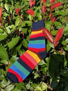 80% Combed Cotton/17% Nylon/3%Spandex Multi Stripe Colours Comes with Bassin and Brown Sock Rider Cotton Mid Calf Multi Stripe One size fits most (7-11 UK | 8-12 USA | 40-45 EUR). Red And Teal, Blue Brown, Purple And Black, Navy And White, Argyle Socks, Striped Socks, Wool Socks, Cotton Socks, Multi Coloured Socks