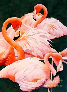 Watercolor of flamingos - lovely, rich colors!