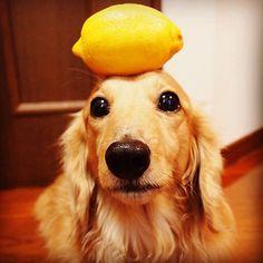 :))  lemonsss