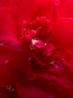 Dot Shop, Dots, Flowers, Plants, Stitches, Plant, Royal Icing Flowers, Flower, Florals