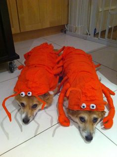 Yay, we are lobsters. Can we be done now?