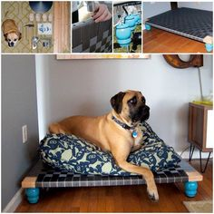 Stunning Project to Make Great PVC Dog Bed, Elavated Needed!