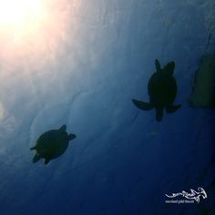 When the sun goes down ...  ... #scuba #relaxedguideddives #tauchen #snorkeling #fun #turtle #curacao