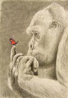 Gorilla and the butterfly by MagneticartAgnes