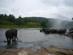Pinnawala, O Orfanato dos Elefantes Sri Lanka, Elephant, Animals, Places, Travel, Elephants, Animales, Animaux, Animal