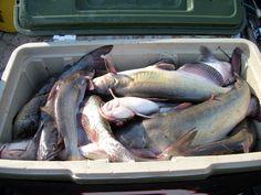 Channel catfishing from Boutte LaRose locks.