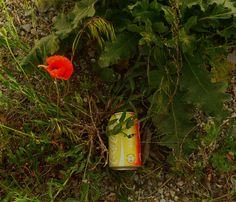 Orange - nature/culture.