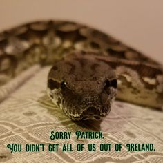 Pagan St Patrick's Day Cultural Identity, Snakes, Best Part Of Me, St Patricks Day, Pagan, Saints, Apple Magic, Voodoo, Witchcraft
