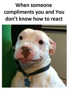 Someone Compliments You #Best-Funny-Pictures, #Compliments, #Crazy-Funny-Pictures, #Someone