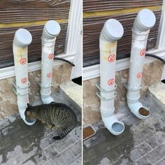 It's time for you to diy cat toys in order to have some cat fun. We hope that this diy cat will get you creative. Diy cat items are good for working now. Diy cat furniture will make your cat happy. Diy ideas for whevere you have free time! Feral Cat Shelter, Feral Cats, Shelter Dogs, Outdoor Cat Enclosure, Cat Hacks, Outdoor Cats, Outdoor Cat Shelter, Cat Room, Pet Furniture