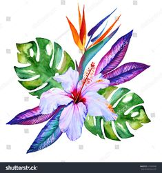 tropical flowers in watercolor hibiscus plumeria monstera palm bird of paradise - stock photo Exotic Flowers, Tropical Flowers, Hawaiian Flowers, Purple Flowers, Watercolor Flowers, Watercolor Paintings, Drawing Flowers, Flower Drawings, Hibiscus Drawing